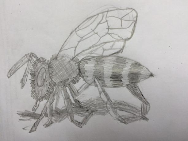 Laurie's bee
